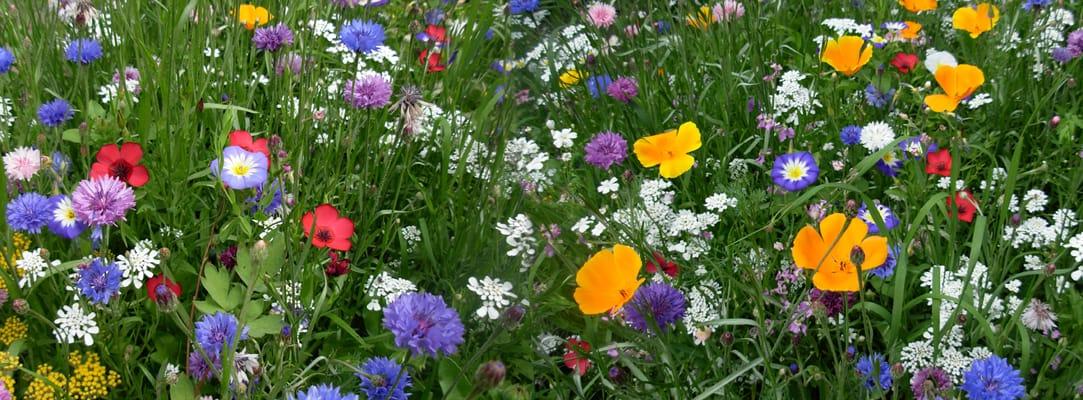 Nieuws operatie steenbreek for Www bloem en tuin nl
